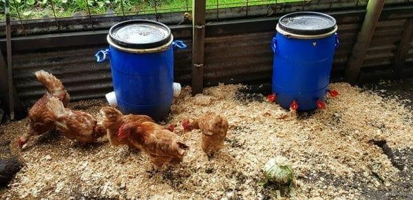 Chicken Feeder & Waterer Pack Ultimate