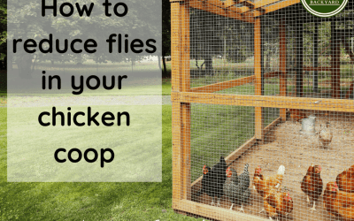 How to reduce flies in the chicken coop