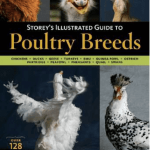 Guide to Poultry Breeds