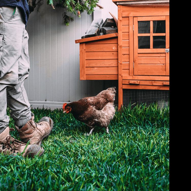 Chicken Supplies and chicken Coop