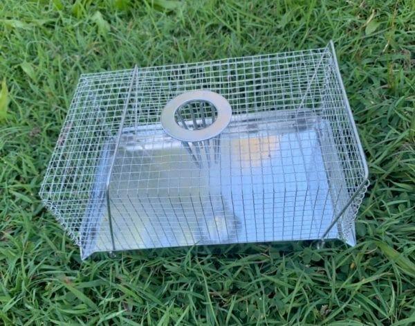 multi mouse trap top