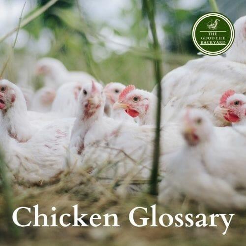 Chicken Glossary